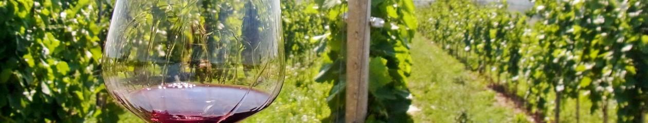 オーストリアワイン入門 by ワンモアグラス